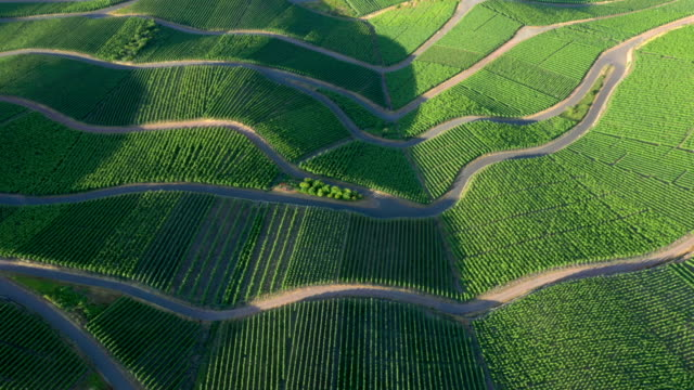 vineyards - viniculture stock videos & royalty-free footage
