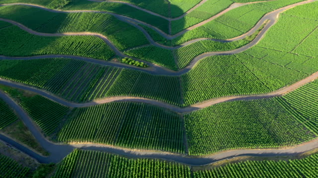 vineyards - cultivated land stock videos & royalty-free footage