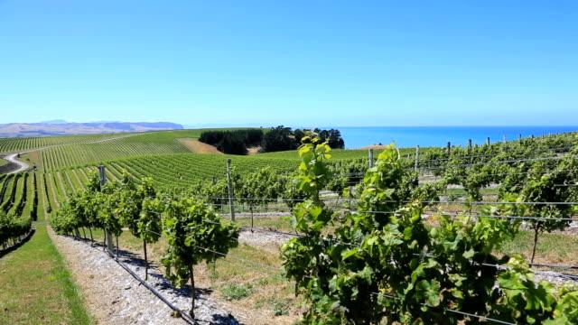 vineyards - vineyard stock videos & royalty-free footage