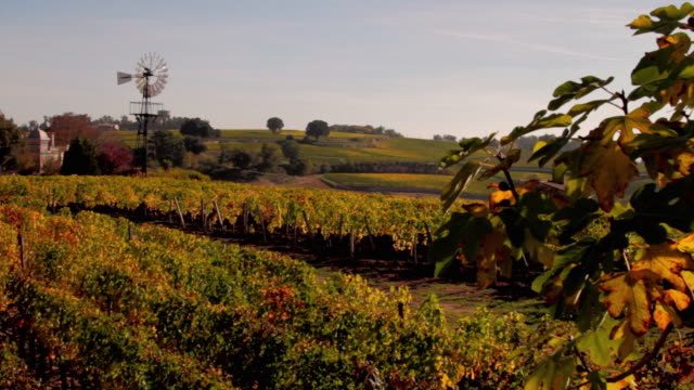 ws vineyards with windmill in autumn / st emilion, aquitaine, france - aquitaine stock videos and b-roll footage