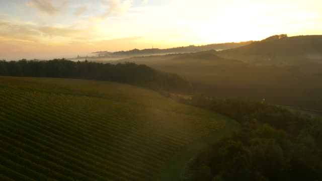 aerial viniferous countryside at dawn - rolling landscape stock videos & royalty-free footage