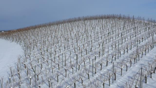 aerial viniferous countryside in the snow - prekmurje stock videos & royalty-free footage