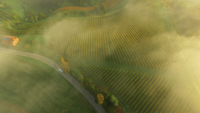 aerial viniferous region in the fog - hill stock videos & royalty-free footage