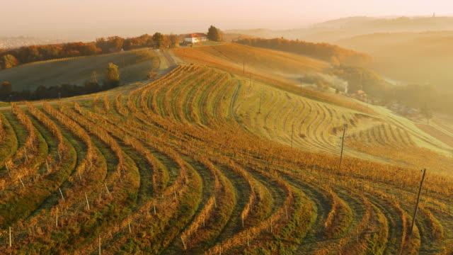 AERIAL Viniferous region of Prekmurje