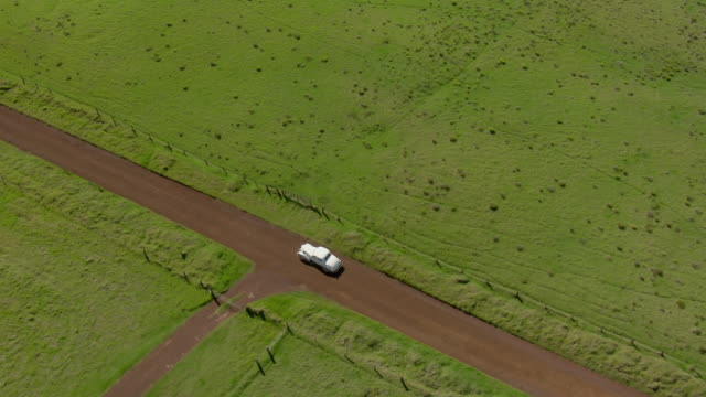 big island, hawaii - november 8, 2010: a vintage 1937 buick special business coupe, model 46, drives through green pastureland on a dirt road. - 一つ点の映像素材/bロール