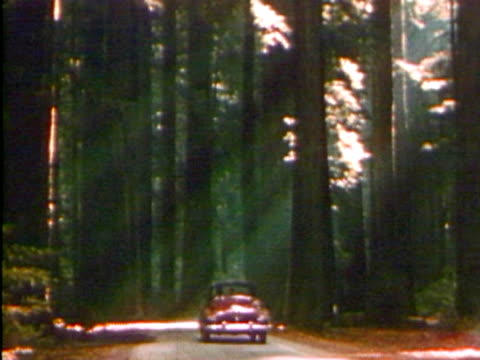 vintage car driving through a forest - old convertible stock videos & royalty-free footage