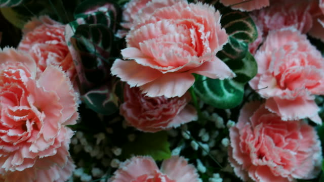 vintage flower in room , carnation - carnation flower stock videos & royalty-free footage