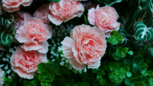 vintage flower in room - carnation flower stock videos & royalty-free footage