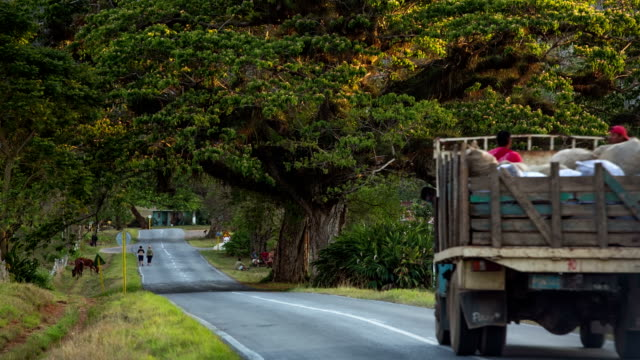 vintage truck on cuban country road - cuba stock videos & royalty-free footage