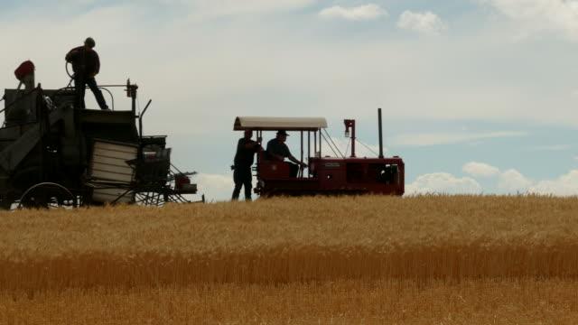 vintage wheat harvest - film moving image stock videos & royalty-free footage