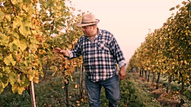 TS Vintner Checking The Grape