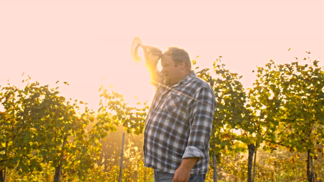 ws vintner in his vineyard - forehead stock videos and b-roll footage