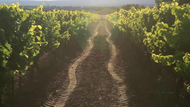 vinyard twighlight - vineyard stock videos & royalty-free footage