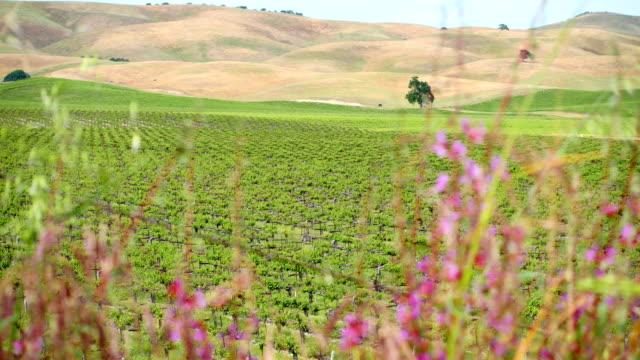 vinyard - north america stock videos & royalty-free footage