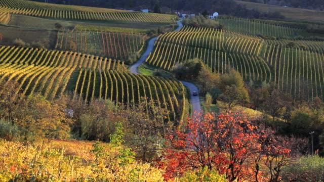 vinyards, nr alba, langhe, nr piedmont, italy, europe - piemonte video stock e b–roll