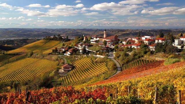 vinyards, treiso nr alba, langhe, nr piedmont, italy, europe - piemonte video stock e b–roll