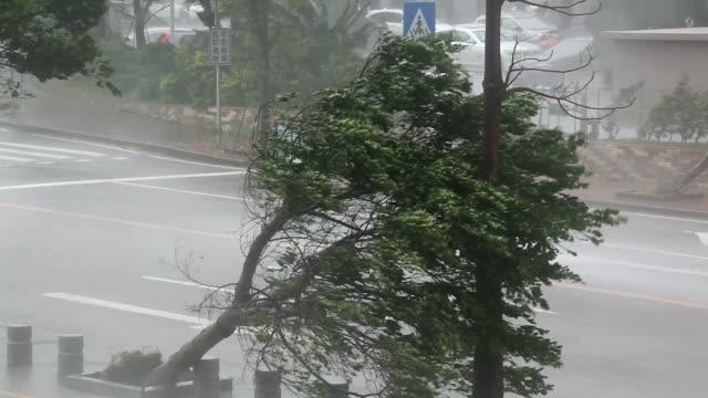 vídeos y material grabado en eventos de stock de violent hurricane eyewall winds lash city - huracán