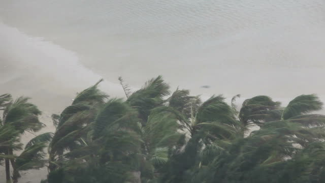 violent hurricane eyewall winds lash palm trees - emergencies and disasters stock videos & royalty-free footage