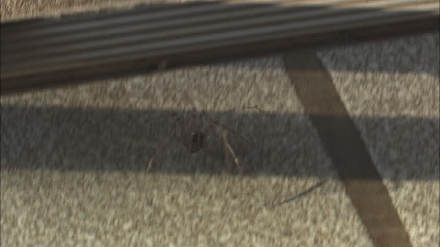 a violin spider crawls across a cement porch and onto a linoleum floor. - danger stock videos & royalty-free footage