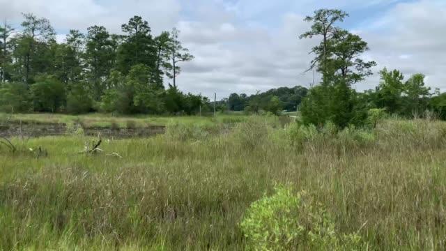 stockvideo's en b-roll-footage met virginia beach marsh lands - moeras