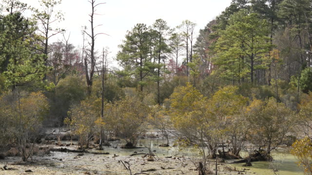 Virginia forest and swamp