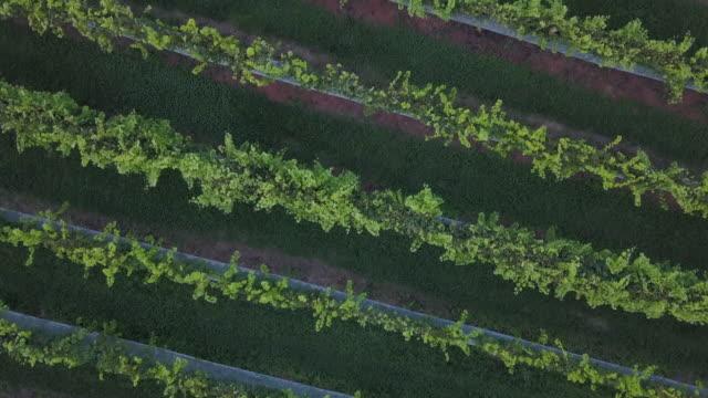 stockvideo's en b-roll-footage met virginia wijngaarden - virginia amerikaanse staat