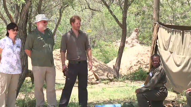 vidéos et rushes de a visibly emotional prince harry has released a series of photos and videos on social media after being shown the carcasses of a rhino and her calf... - 2015