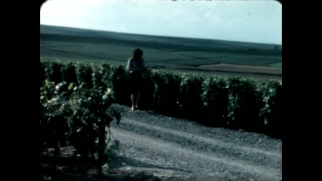 vidéos et rushes de visiting a french vineyard in the early 1980's from a home movie reel - nostalgie