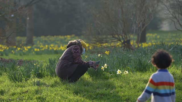 visitor at kew gardens takes a picture of daffodils on their smartphone at kew gardens on march 2, 2021 in london, england. - formal garden stock videos & royalty-free footage