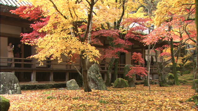 A visitor photographs the beautiful autumn leaves in the garden of a Japanese temple.