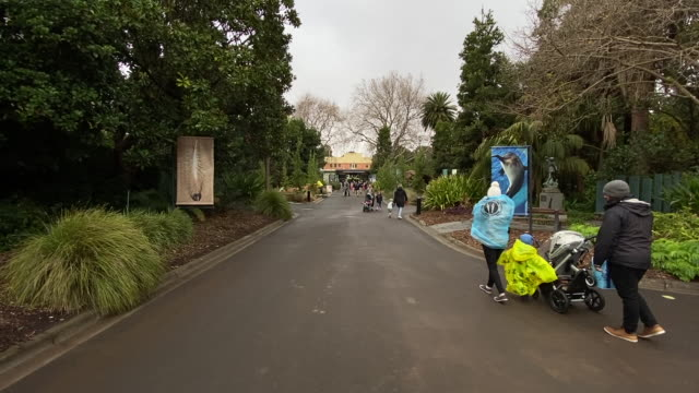 visitors enjoy the re-opening of melbourne zoo on june 01, 2020 in melbourne, australia. melbourne zoo has reopened to the public as covid-19... - tattoo stock videos & royalty-free footage