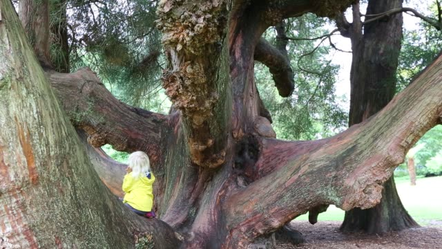 visitors enjoy the view of an old cyprus tree in trelissick gardens near falmouth, cornwall, united kingdom on august 20, 2015. - brown stock videos & royalty-free footage