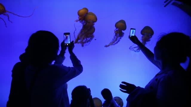 vídeos y material grabado en eventos de stock de ws visitors look at fish swimming overhead at the shanghai ocean aquarium in shanghai china on friday april 24 2015 shots ws visitors take... - cnidario