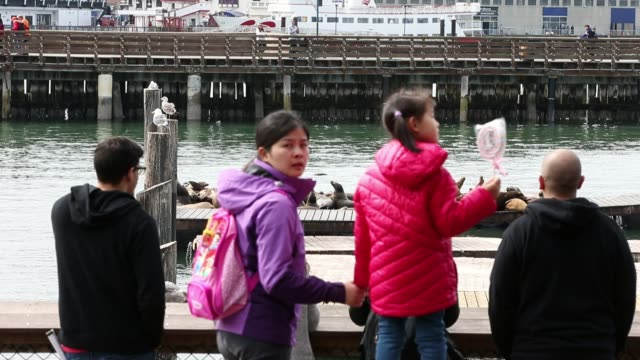 stockvideo's en b-roll-footage met visitors observe sea lions on pier 39 on march 11 2015 in san francisco california - pier 39