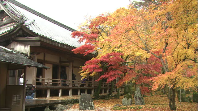visitors photograph autumn leaves in the garden of a japanese temple. - 福岡県点の映像素材/bロール