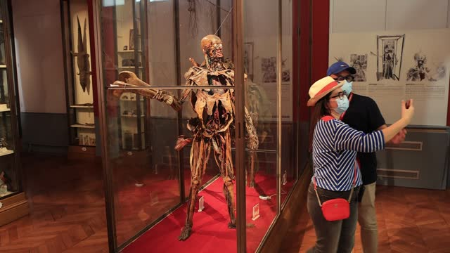 """visitors take a selfie next to an """"ecorché de fragonard"""" mummies with open entrails at the fragonard museum, dedicated mainly to preserved animals... - anatomy stock videos & royalty-free footage"""