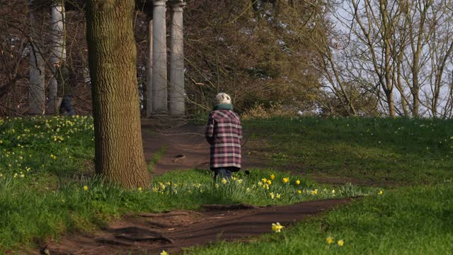 visitors to kew gardens walk pass daffodils at kew gardens on march 2, 2021 in london, england. - formal garden stock videos & royalty-free footage