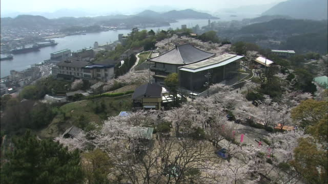 visitors view cherry blossoms as they stroll around senkoji park. - hiroshima prefecture stock videos and b-roll footage