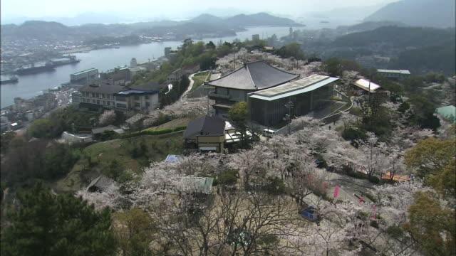 vidéos et rushes de visitors view cherry blossoms as they stroll around senkoji park. - hiroshima prefecture