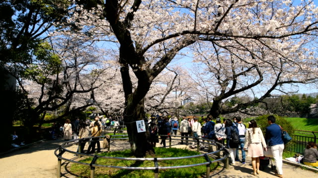 visitors walk under cherry blossom in chidorigafuchi park on march 25 2018 in tokyo japan the japanese have a longheld tradition of enjoying the... - storia sociale video stock e b–roll