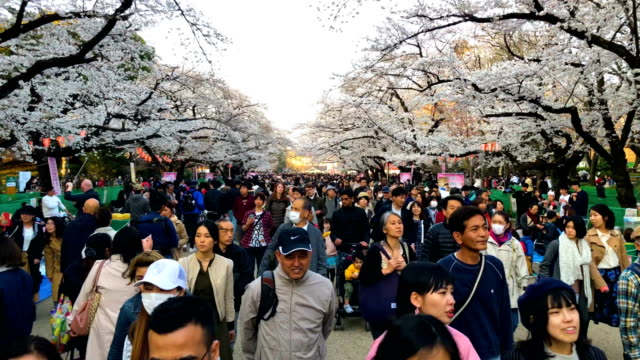 stockvideo's en b-roll-footage met visitors walk under cherry blossom in chidorigafuchi park on march 25 2018 in tokyo japan the japanese have a longheld tradition of enjoying the... - sociale geschiedenis