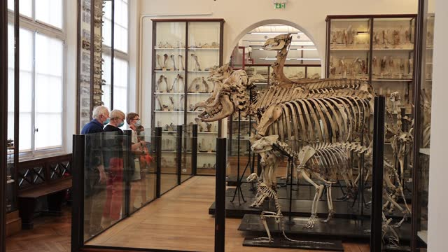 visitors watch a collection of equine skeletons at the fragonard museum, dedicated mainly to preserved animals and anatomical oddities on july 8 in... - anatomy stock videos & royalty-free footage