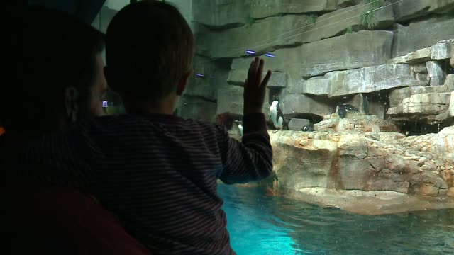 visitors watch penguins from behind glass at the shedd aquarium in chicago on april 22, 2016. - shedd aquarium stock videos & royalty-free footage