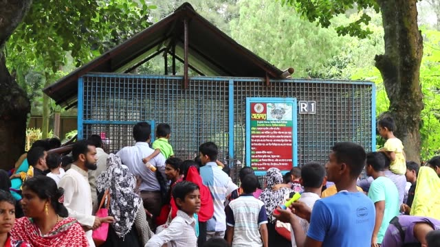 visitors watch the indian rock pythons eat baby chickens at bangladesh national zoo in dhaka. - 丸くなる点の映像素材/bロール