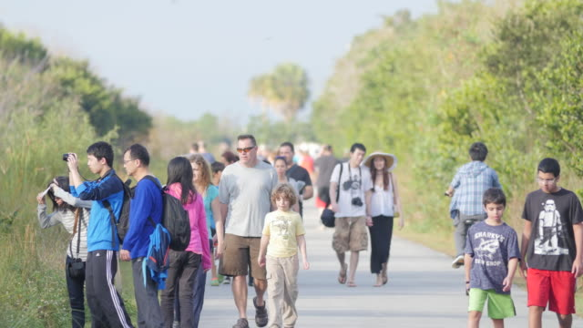 Visitors watching birds and alligators on Anhinga trail in Everglades National Park