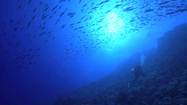 vista, gail swimming, red sea, egypt - tompot blenny stock videos and b-roll footage