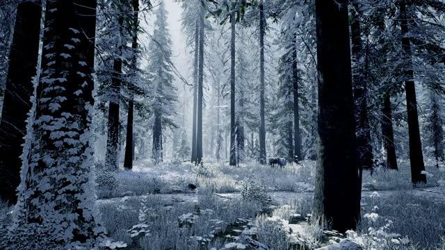 stockvideo's en b-roll-footage met 3d visualisatie van het winterbos. panorama van een mooi het winterboslandschap, vroeg in de ochtend - mystery