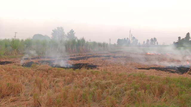 visuals of burning stubble in the farms of chandigarh, on october 19, 2020. smoke can be seen rising from the ground. the air quality index in... - stubble stock videos & royalty-free footage