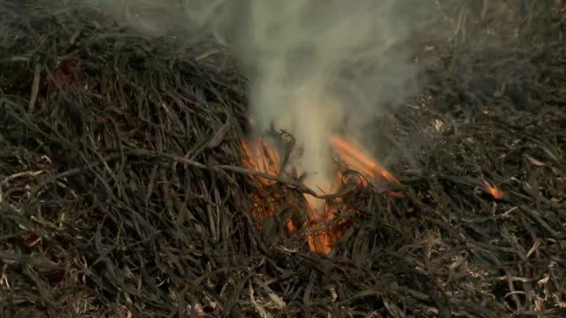 visuals of farmers burning stubble in punjab, on october 16, 2020. smoke can be seen rising from the burning stubble in the middle of the fields.... - stubble stock videos & royalty-free footage