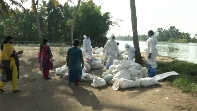 stockvideo's en b-roll-footage met visuals of the process of culling the birds in thiruvananthapuram due to bird flu in kerala. the state government had on monday ordered the culling... - vogelpestvirus